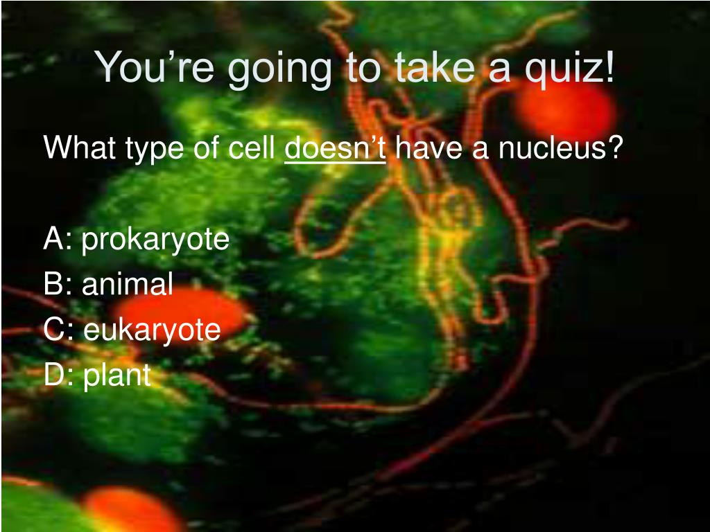 You're going to take a quiz!
