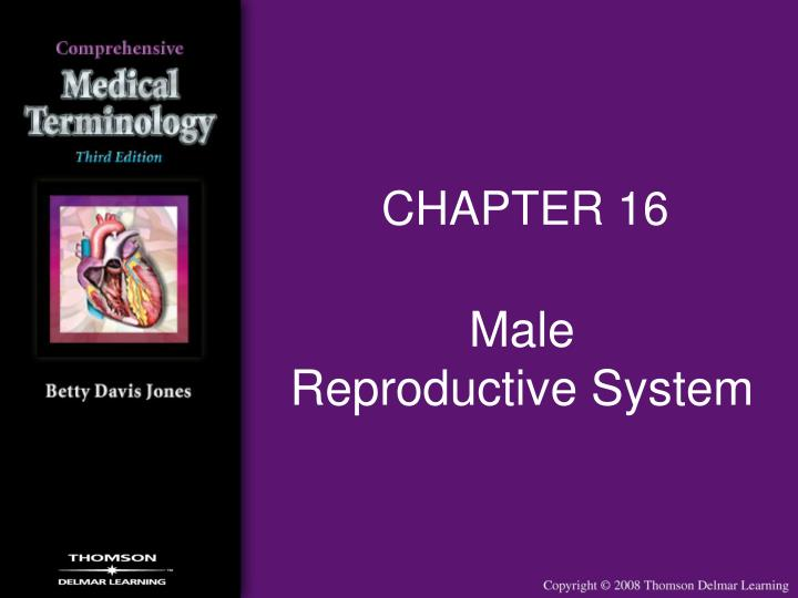 Male reproductive system l.jpg