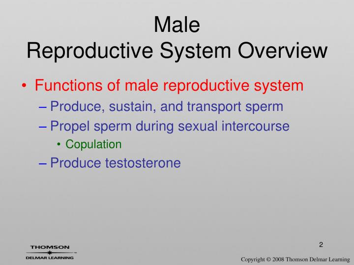 an overview of the male and female reproductive systems How the reproductive system works how the male reproductive system works the main function of the male reproductive system is to produce sperm.
