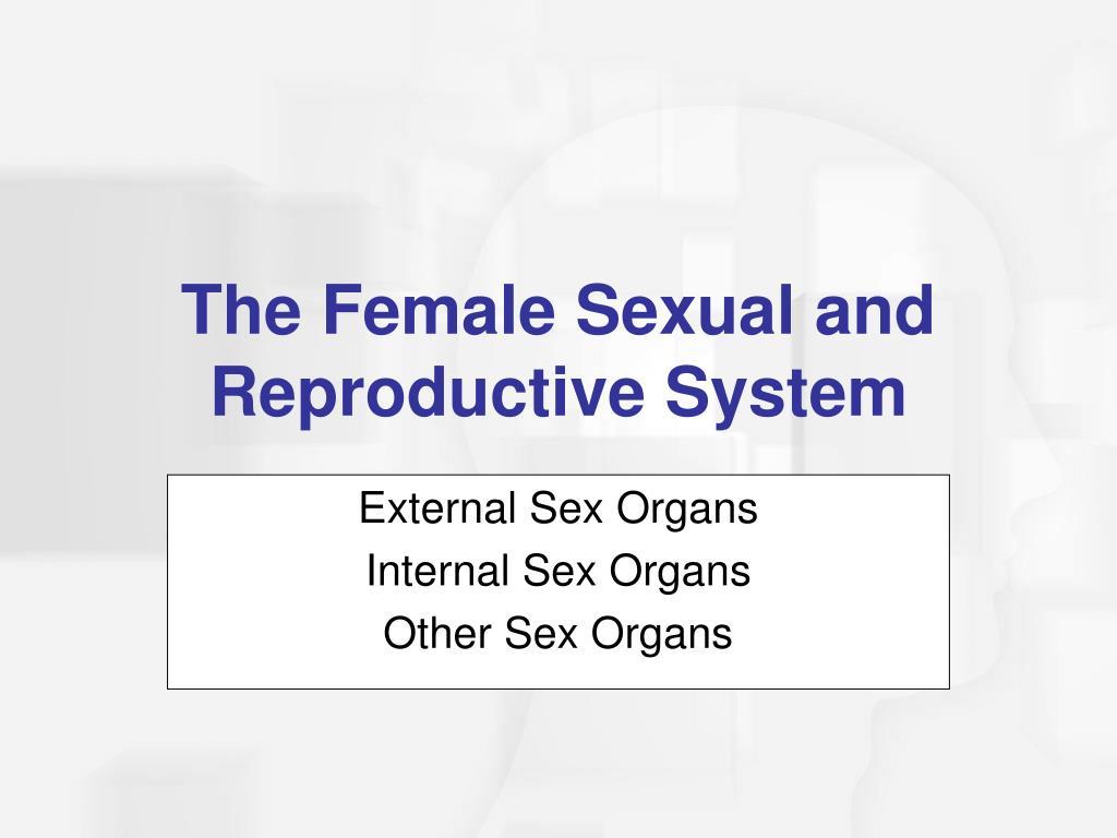 External Sex Organs
