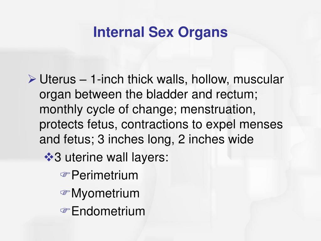 Internal Sex Organs