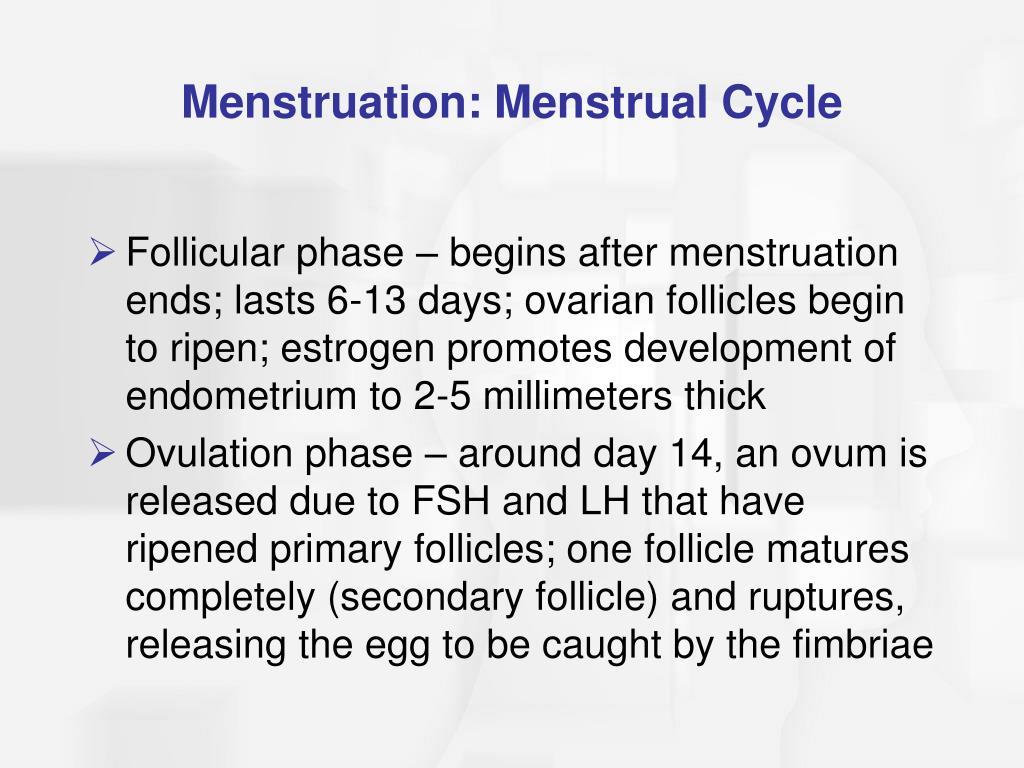 Menstruation: Menstrual Cycle