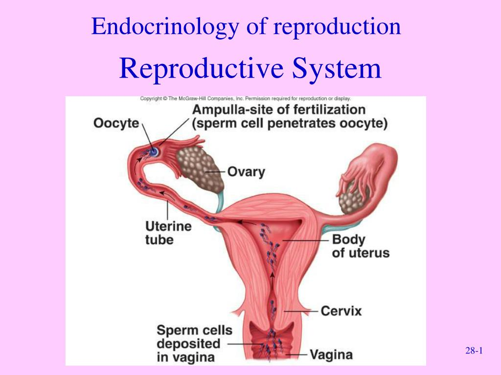 Endocrinology of reproduction