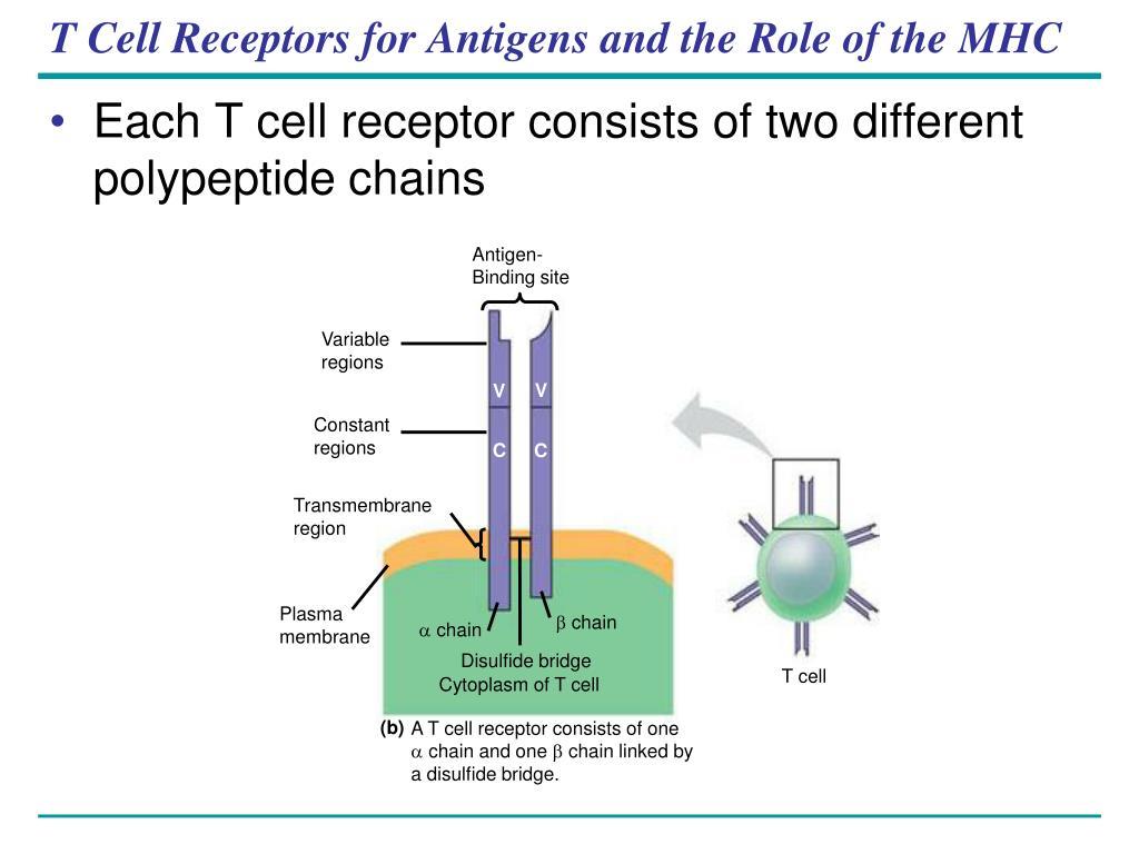 Antigen-