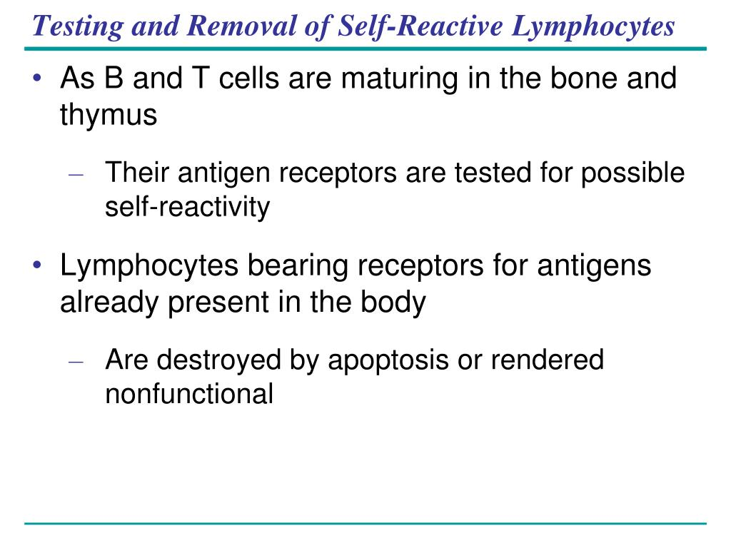 Testing and Removal of Self-Reactive Lymphocytes