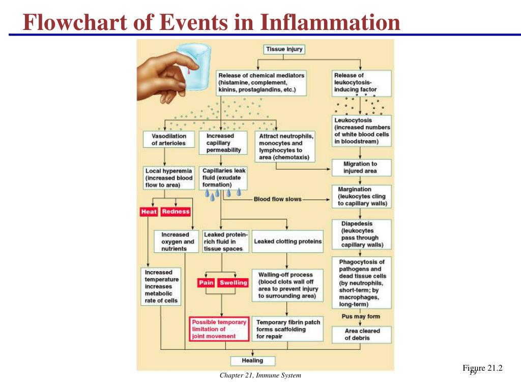 Flowchart of Events in Inflammation
