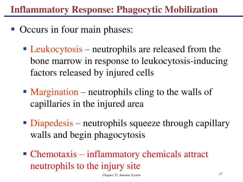 Inflammatory Response: Phagocytic Mobilization