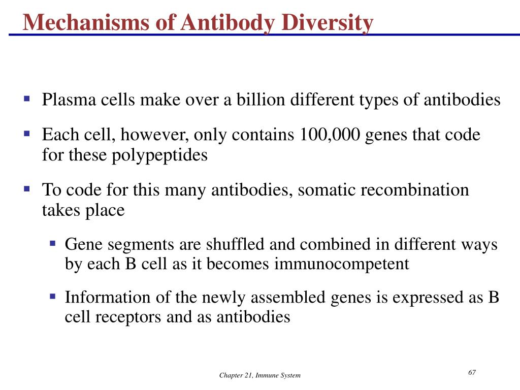 Mechanisms of Antibody Diversity