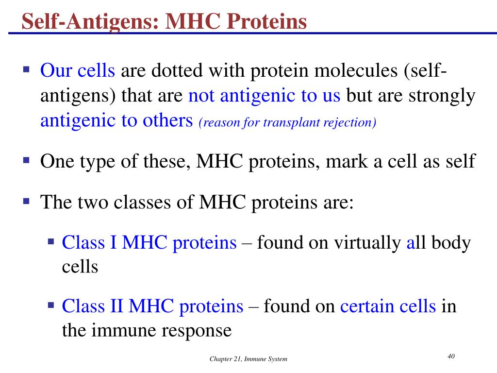 Self-Antigens: MHC Proteins