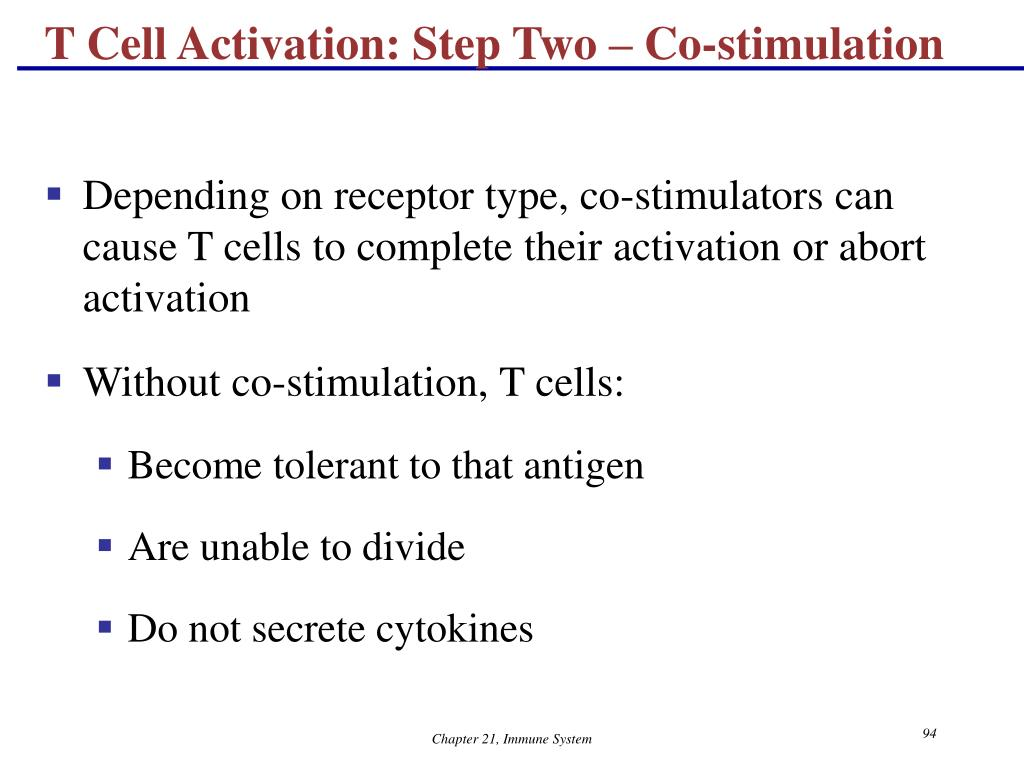 T Cell Activation: Step Two – Co-stimulation