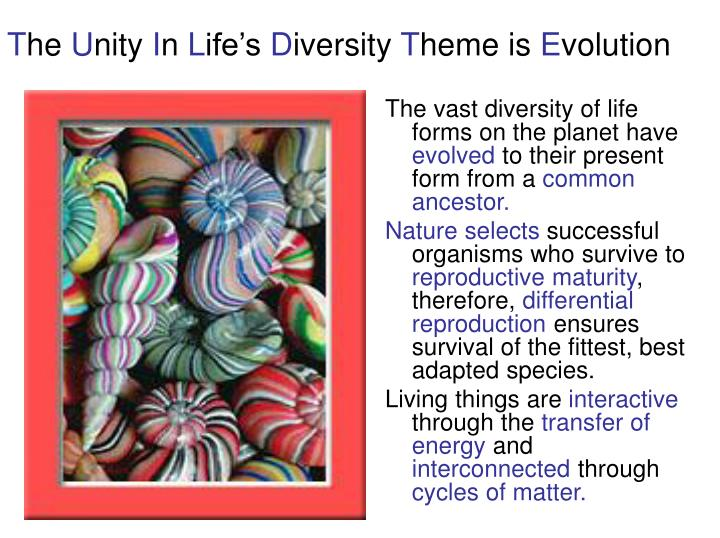 T he u nity i n l ife s d iversity t heme is e volution l.jpg