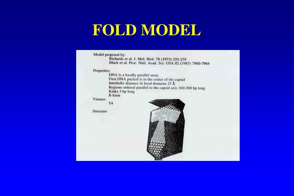 FOLD MODEL