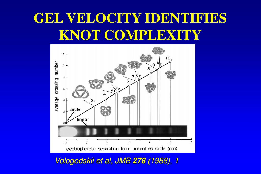GEL VELOCITY IDENTIFIES KNOT COMPLEXITY