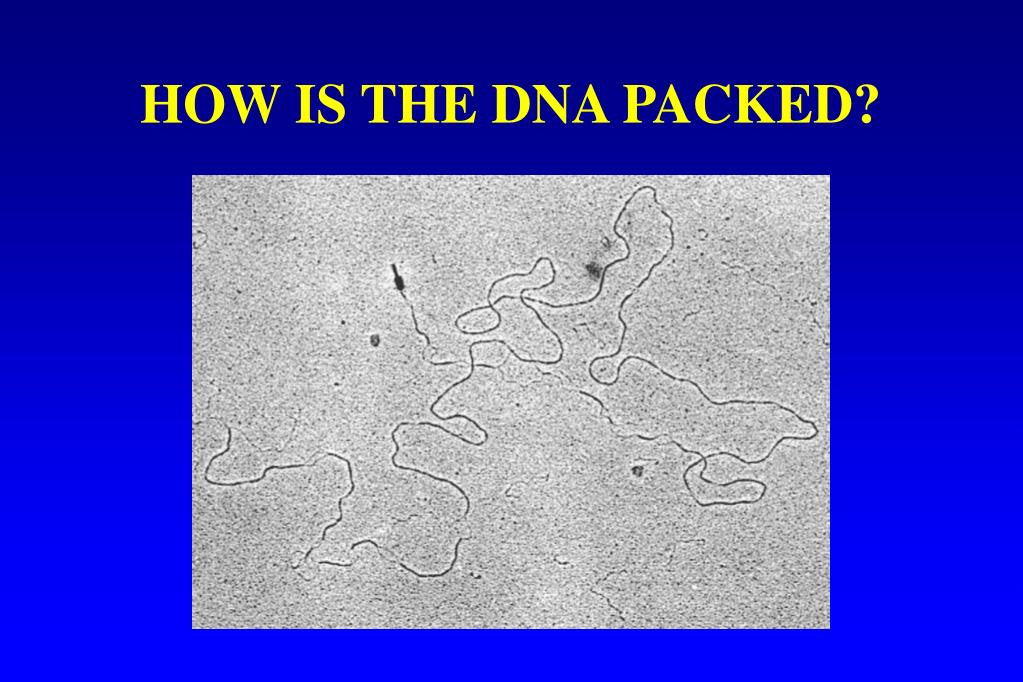 HOW IS THE DNA PACKED?