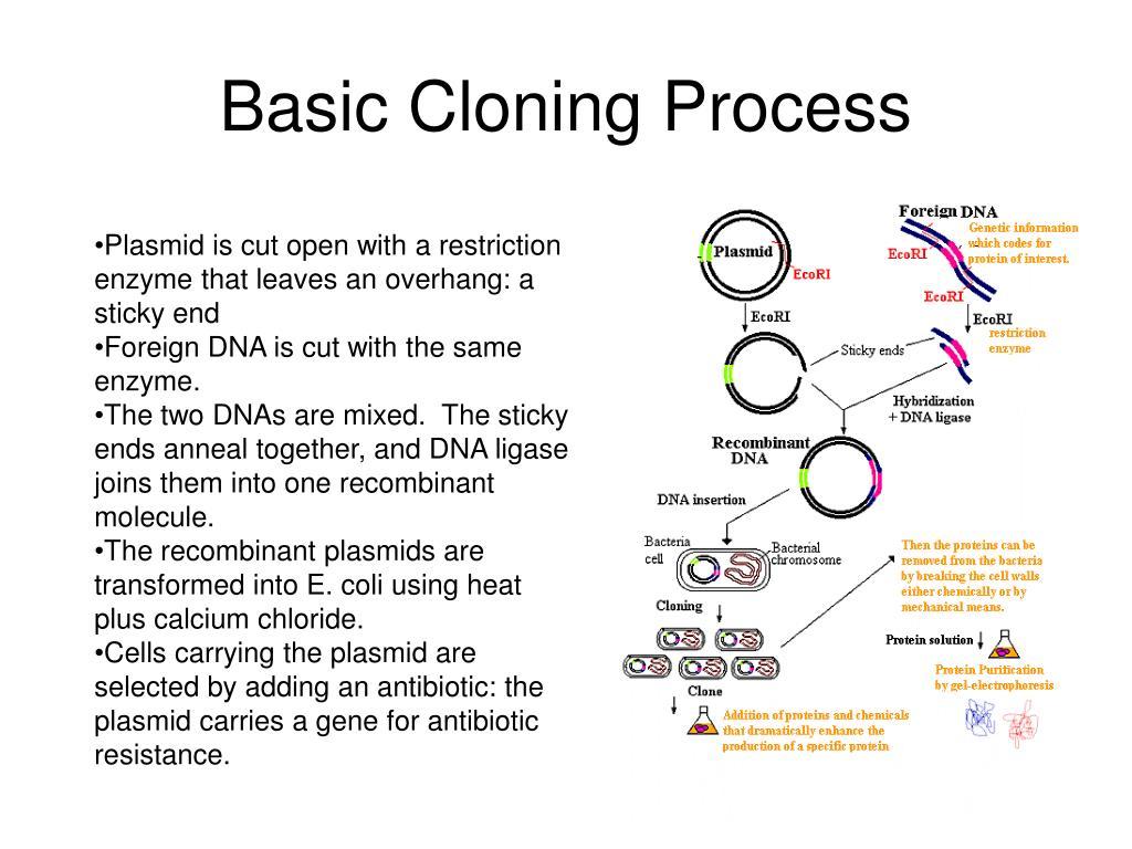 Basic Cloning Process