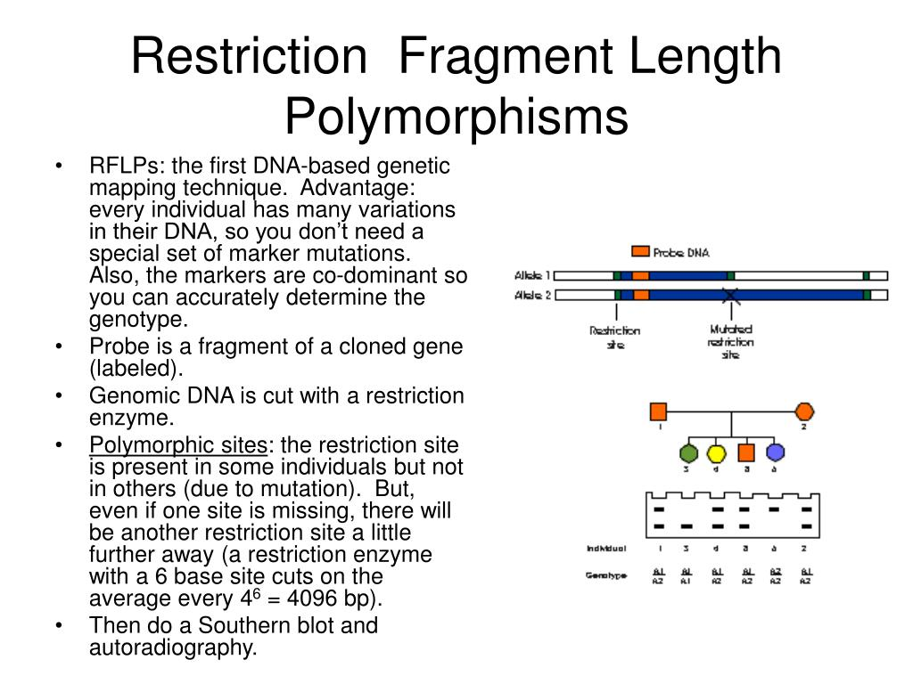 Restriction  Fragment Length Polymorphisms