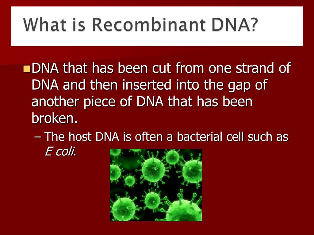 DNA that has been cut from one strand of DNA and then inserted into the gap of another piece of DNA that has been broken.