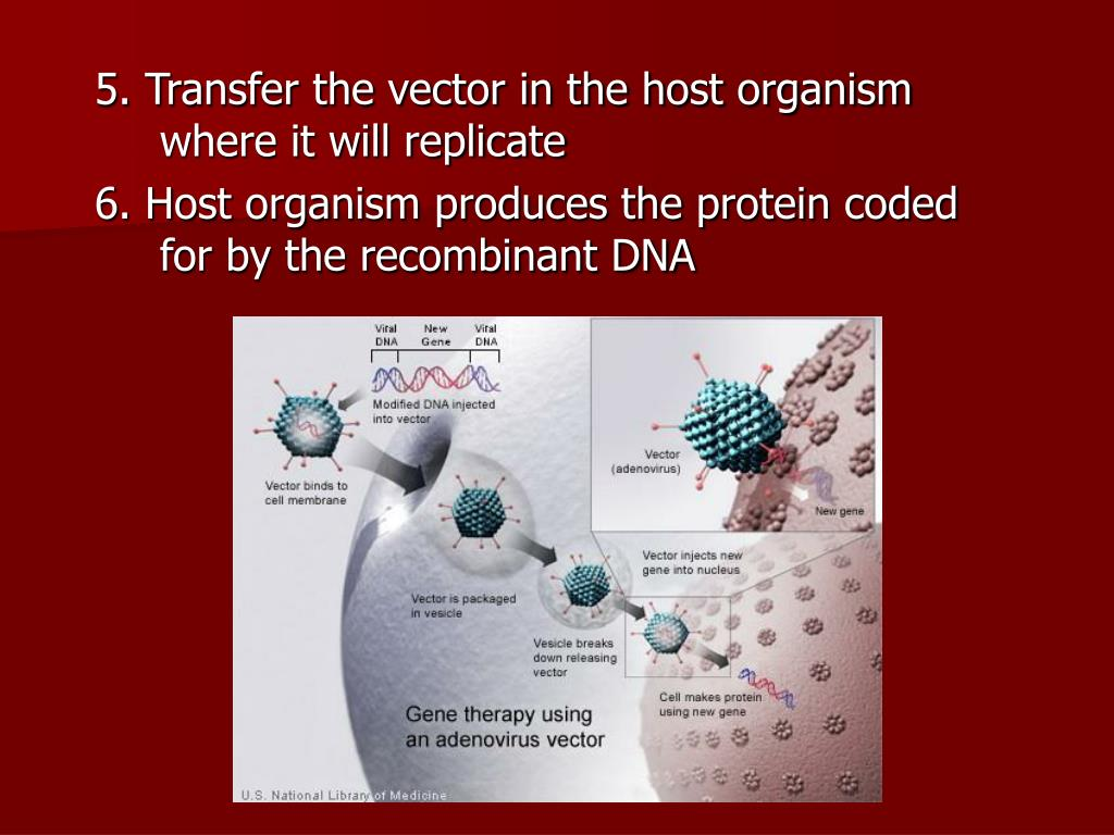 5. Transfer the vector in the host organism where it will replicate