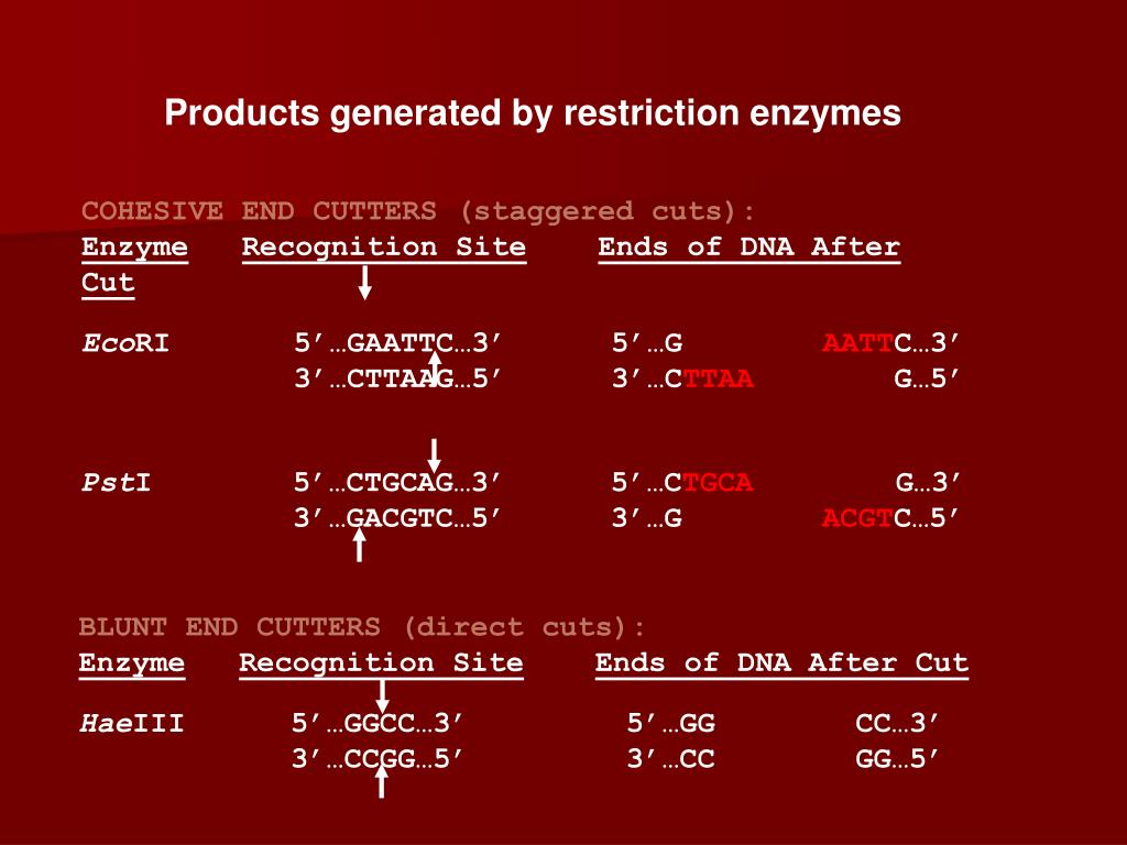 Products generated by restriction enzymes