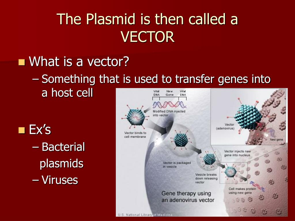 The Plasmid is then called a