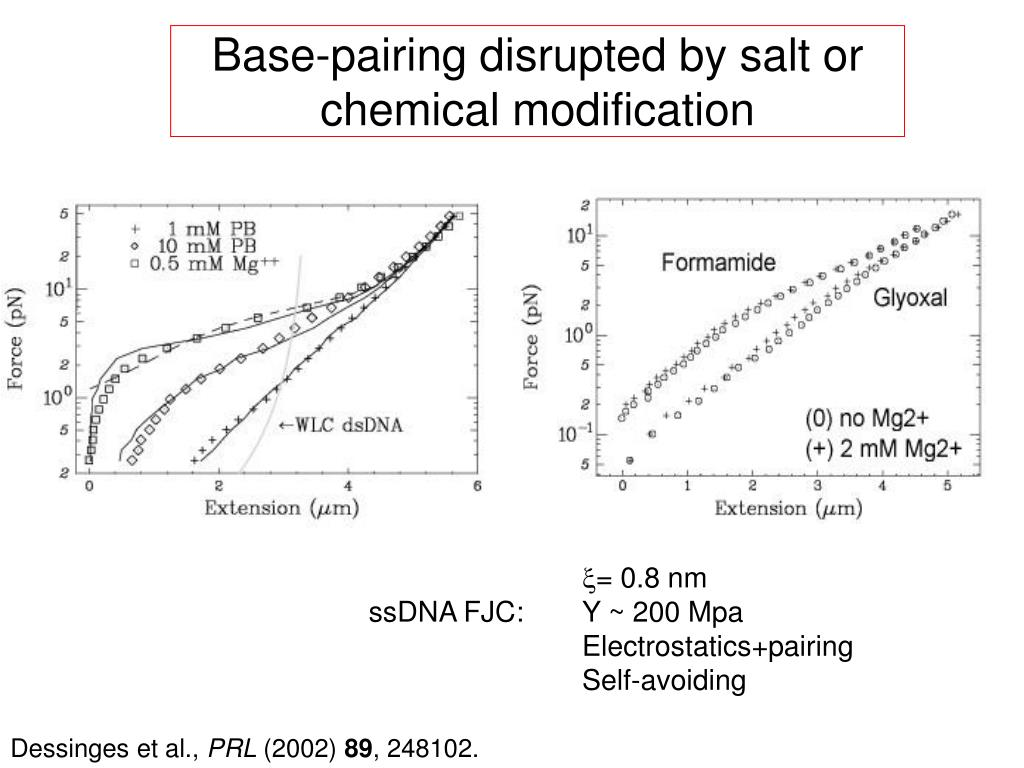 Base-pairing disrupted by salt or chemical modification