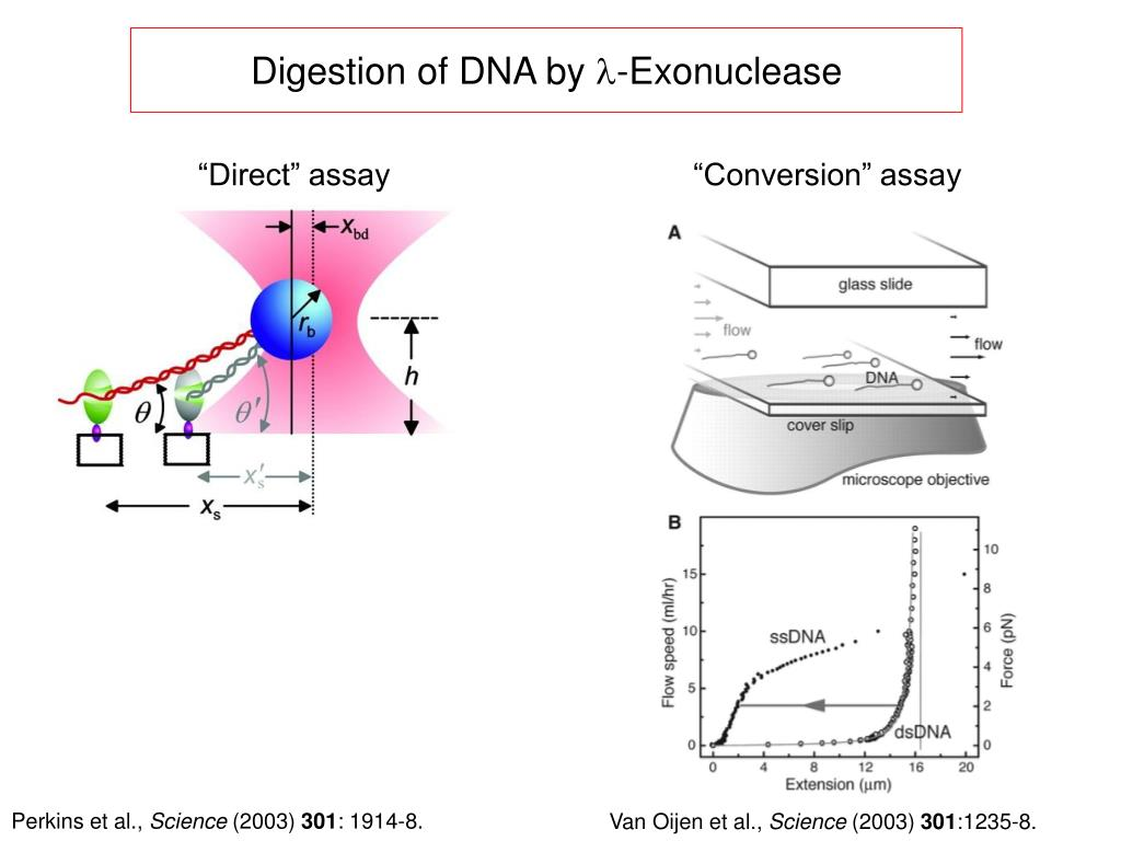 Digestion of DNA by