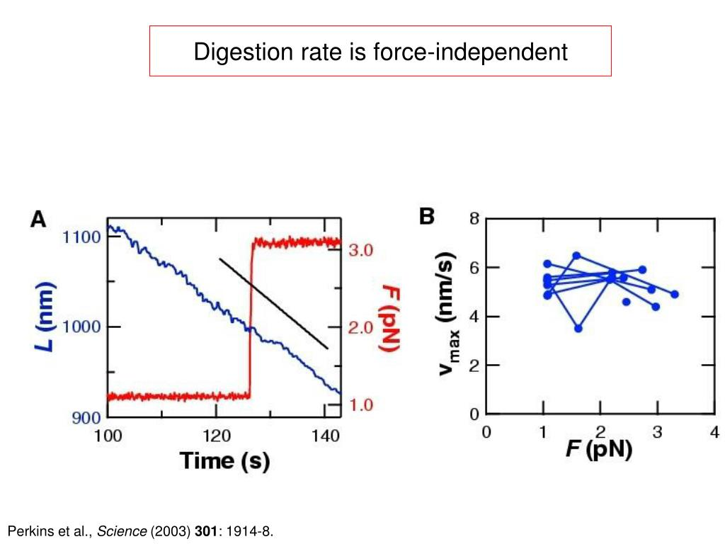 Digestion rate is force-independent