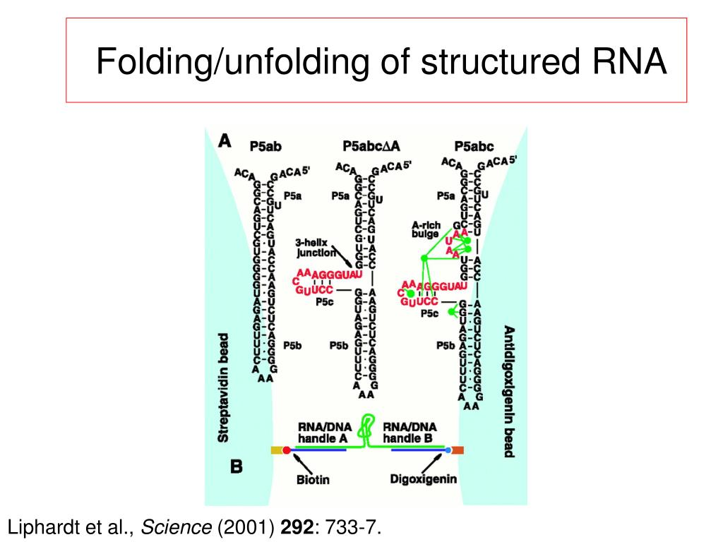 Folding/unfolding of structured RNA