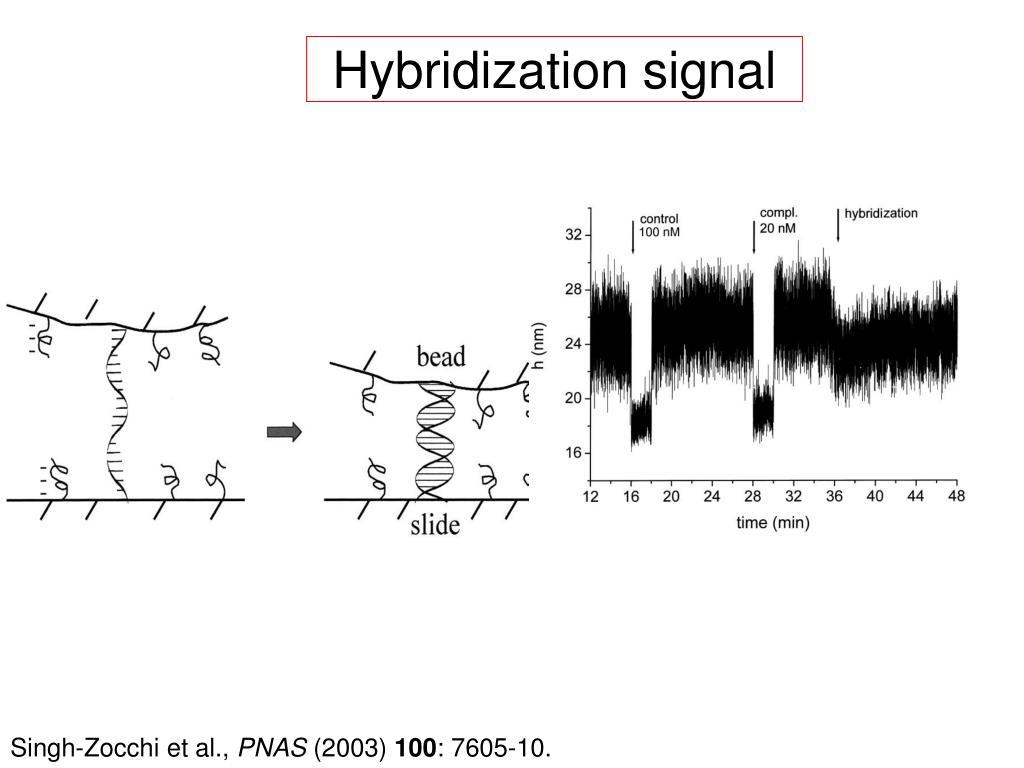 Hybridization signal