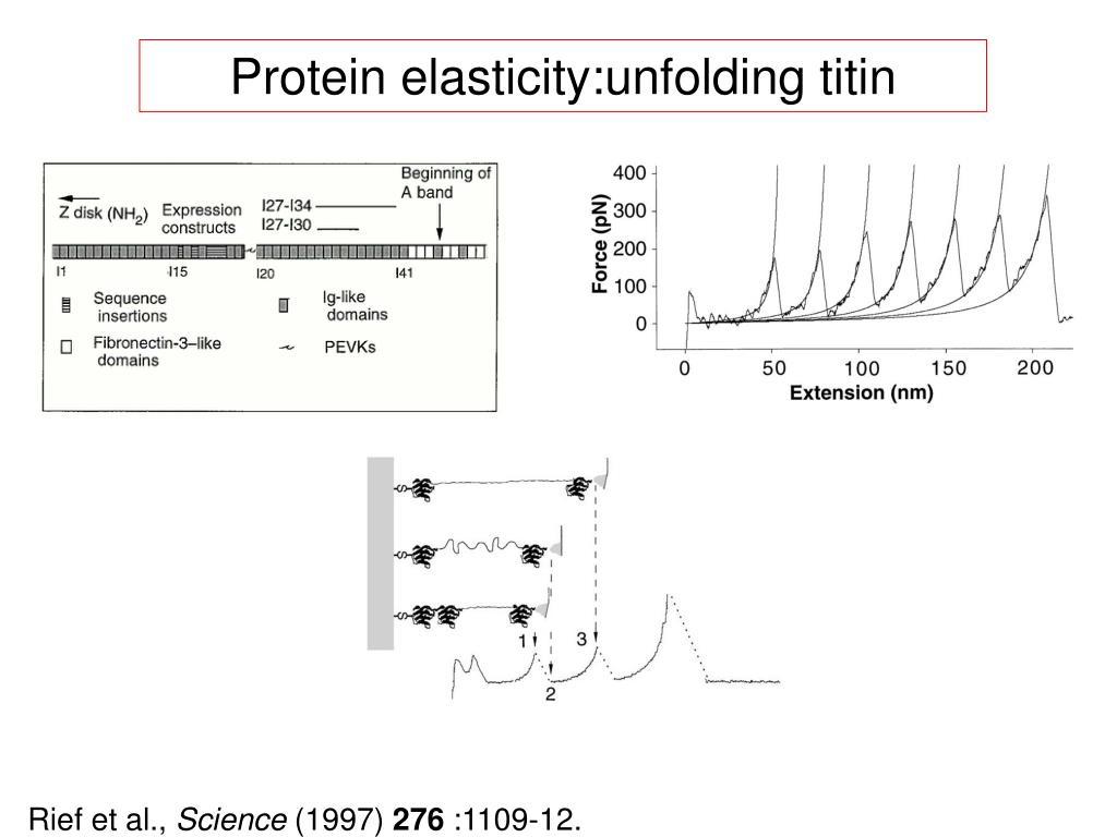 Protein elasticity:unfolding titin