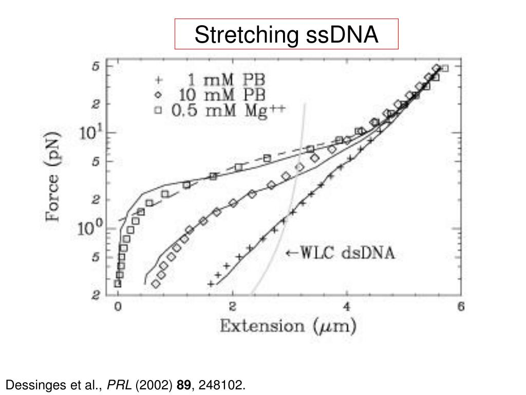 Stretching ssDNA
