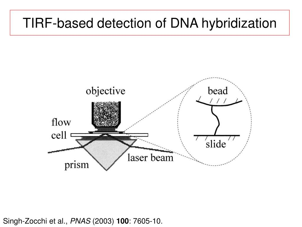 TIRF-based detection of DNA hybridization