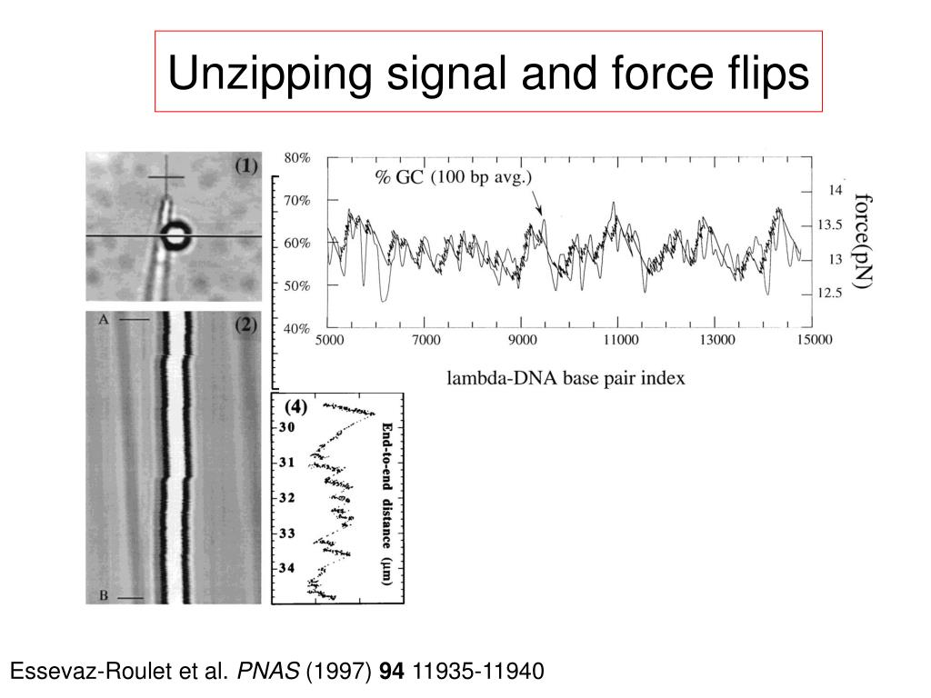 Unzipping signal and force flips