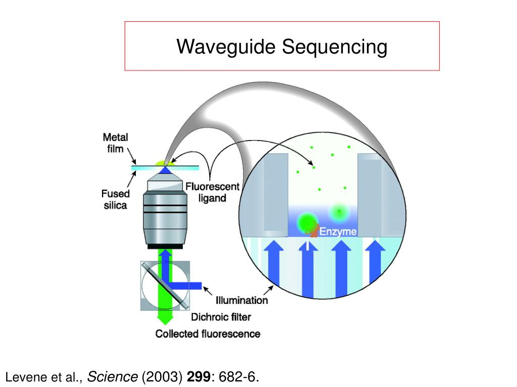 Waveguide Sequencing