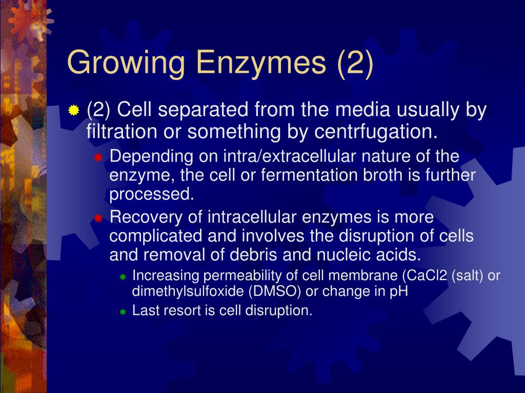 Growing Enzymes (2)