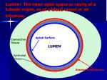 lumen the inner open space or cavity of a tubular organ as of a blood vessel or an intestine