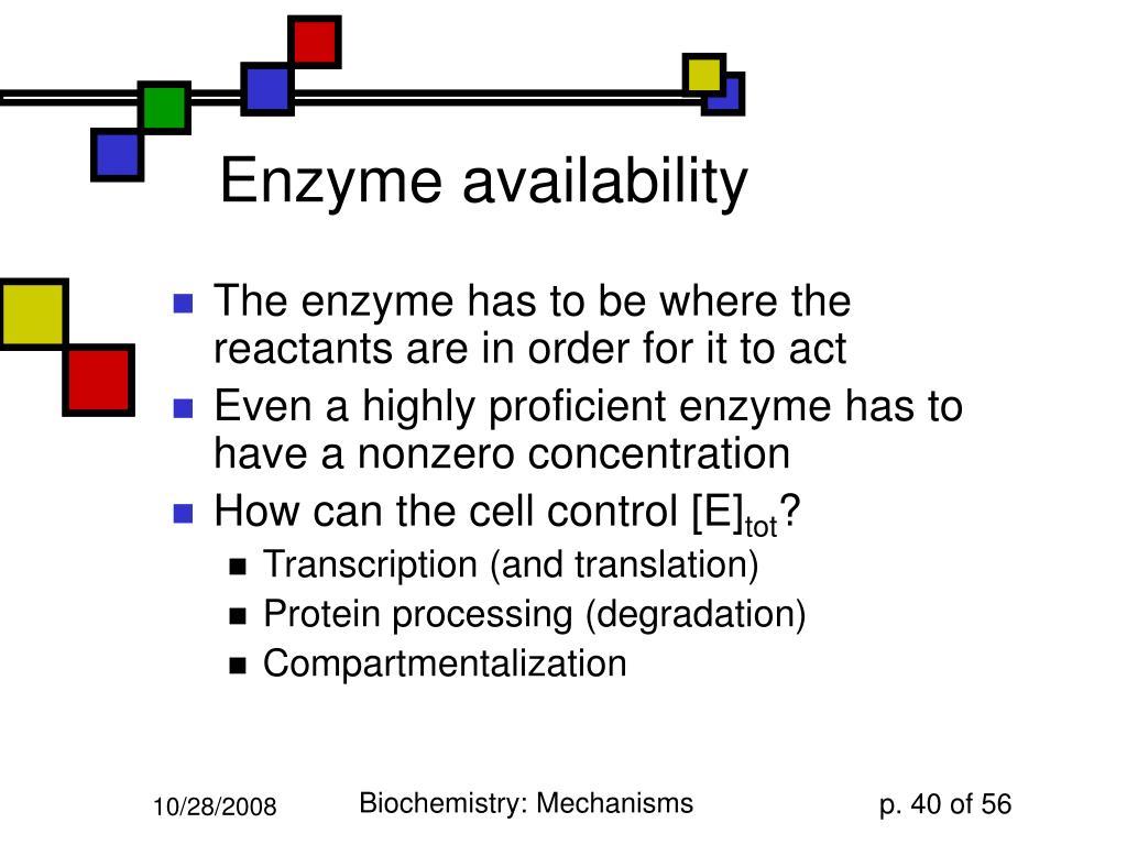 Enzyme availability