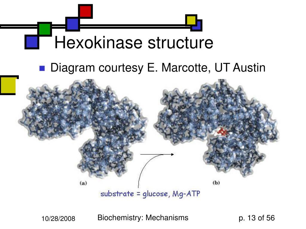 Hexokinase structure