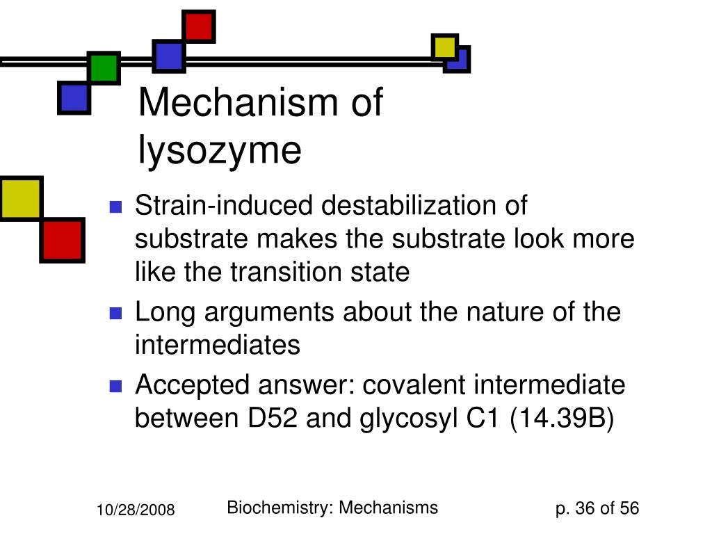 Mechanism of lysozyme