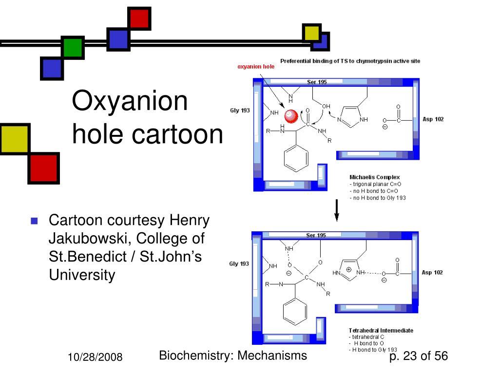 Oxyanion hole cartoon