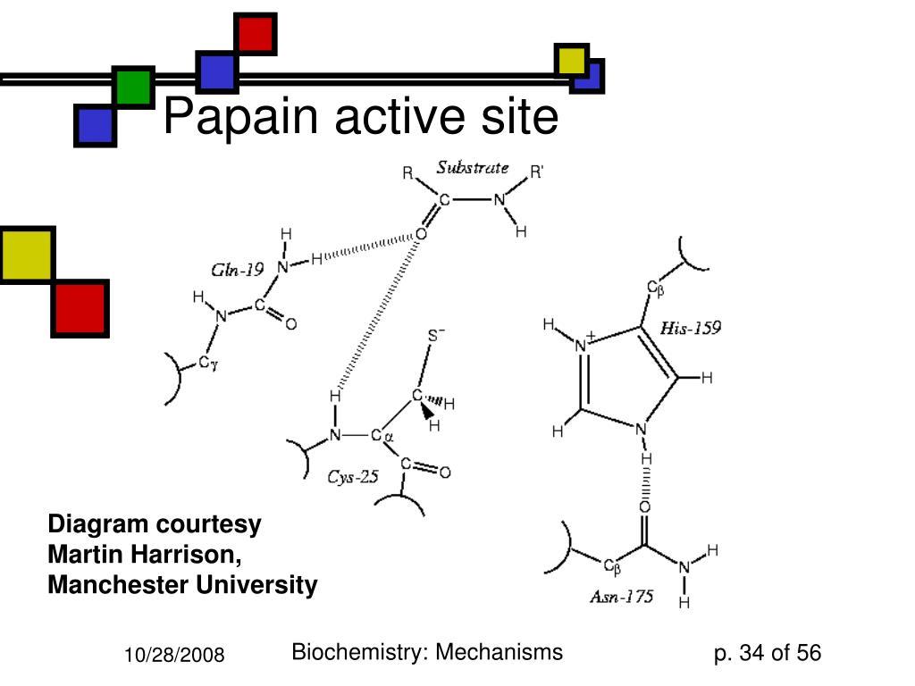 Papain active site