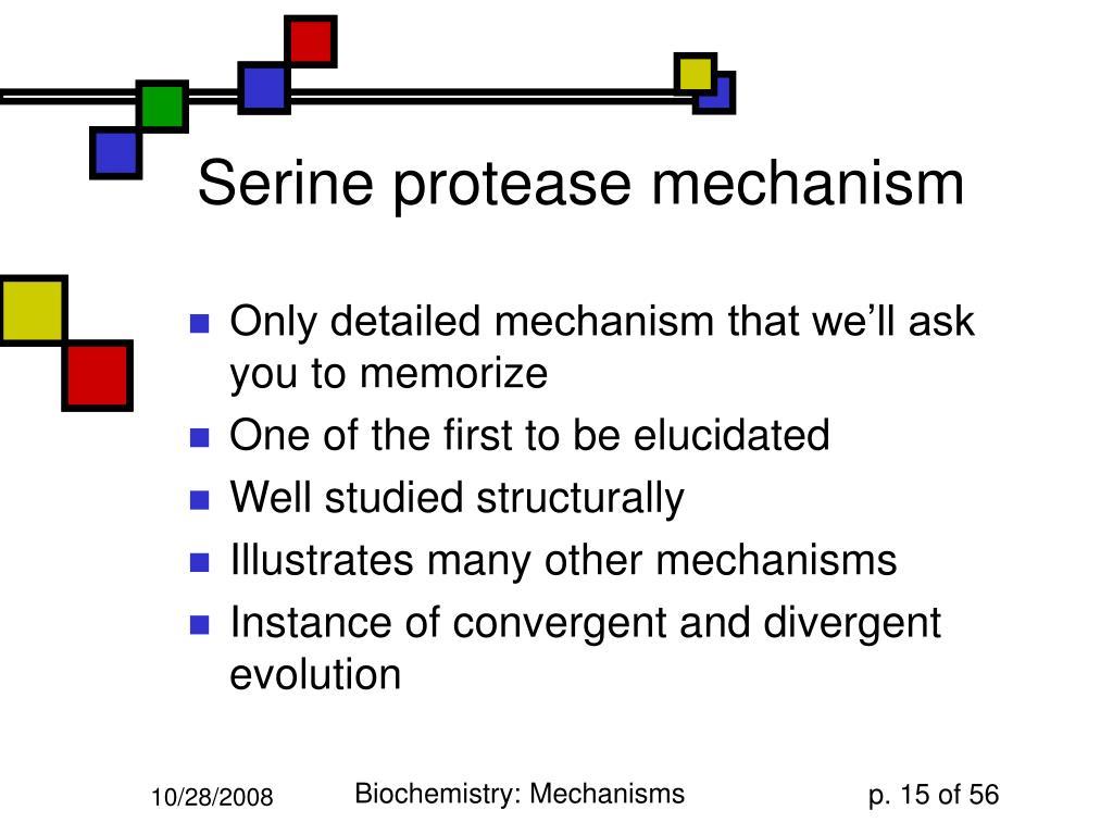 Serine protease mechanism