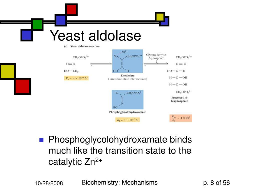 Yeast aldolase