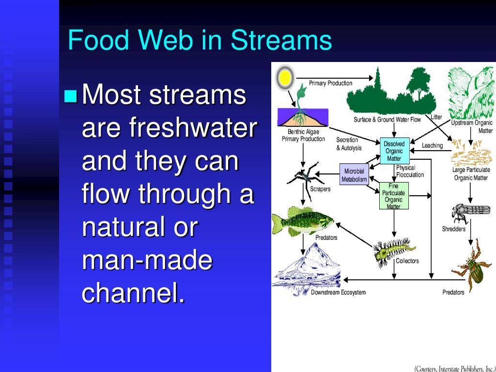 Food Web in Streams