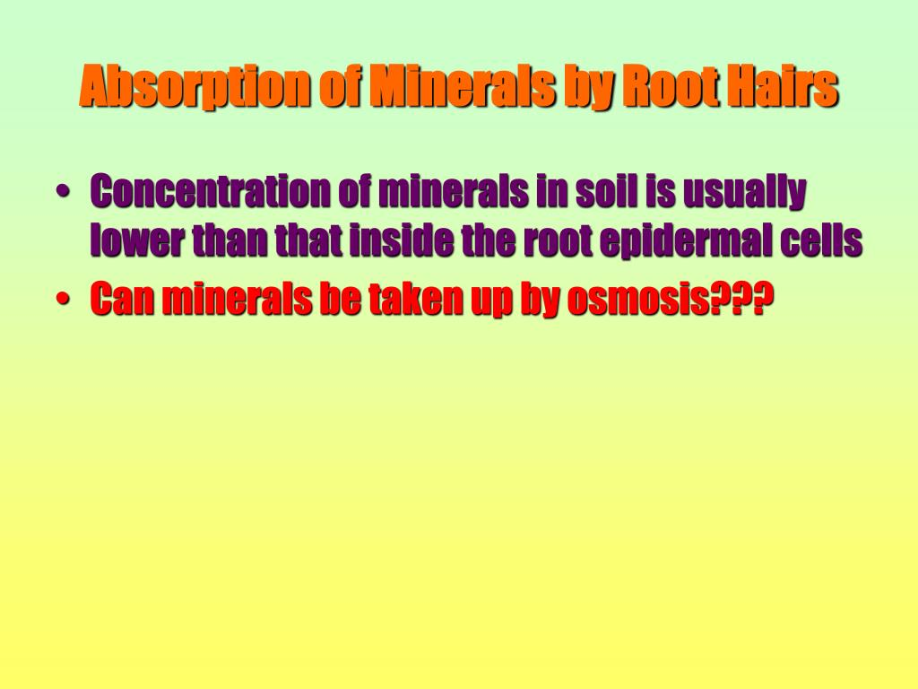 Absorption of Minerals by Root Hairs
