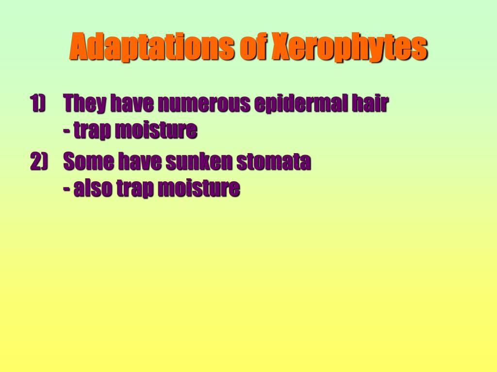 Adaptations of Xerophytes