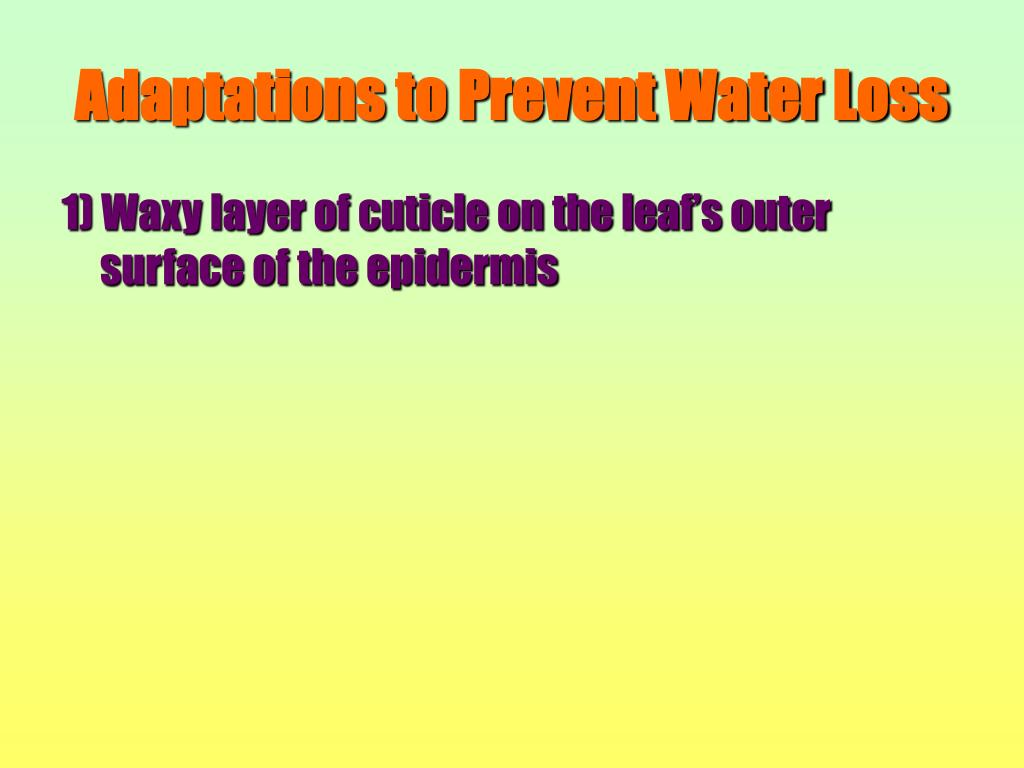 Adaptations to Prevent Water Loss
