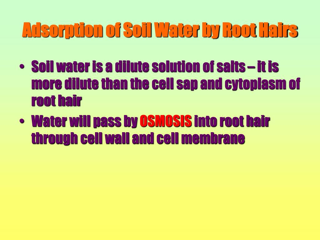 Adsorption of Soil Water by Root Hairs