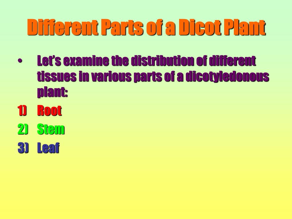 Different Parts of a Dicot Plant