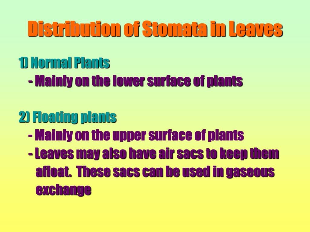 Distribution of Stomata in Leaves